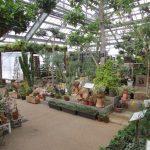 万葉菊花園(温室)